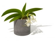 Diatomaceous Earth Planter Holder